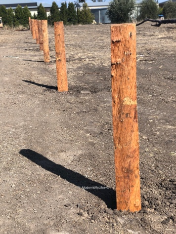 Fence posts are in!